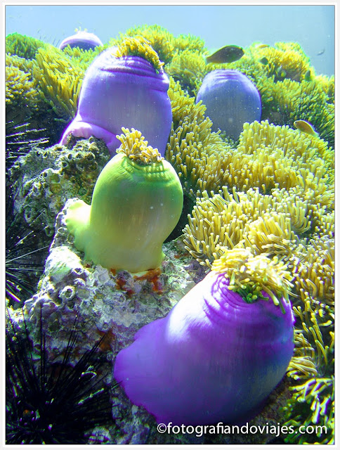 Buceo en Similan, Tailandia
