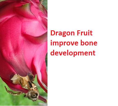 Dragon Fruit improve bone development
