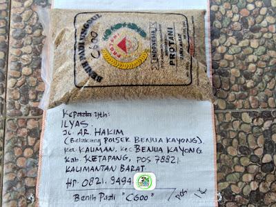 Benih pesana    ILYAS Ketapang, Kalbar.   (Sebelum Packing)