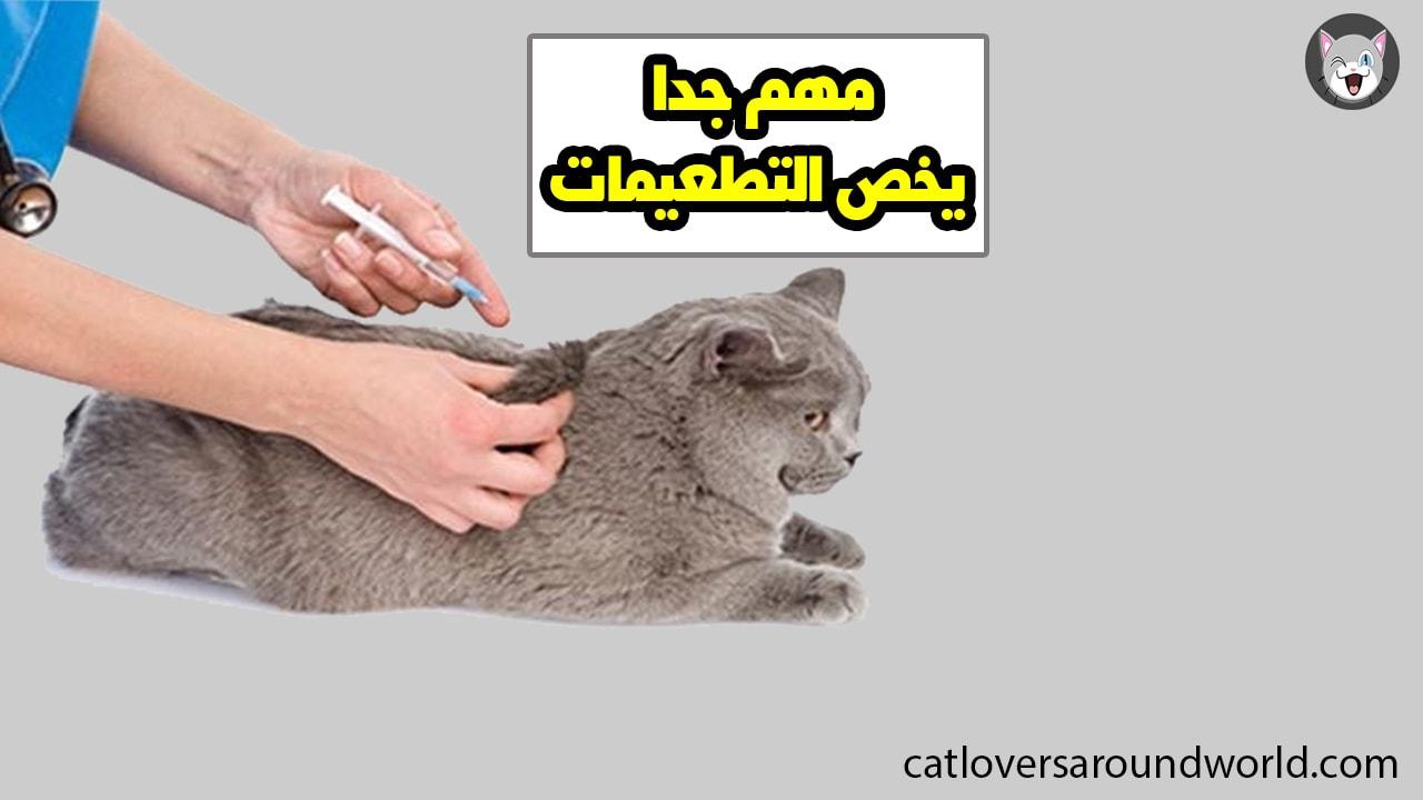هل تلقيح القطط أمر ضروري ؟ هام لمربي القطط