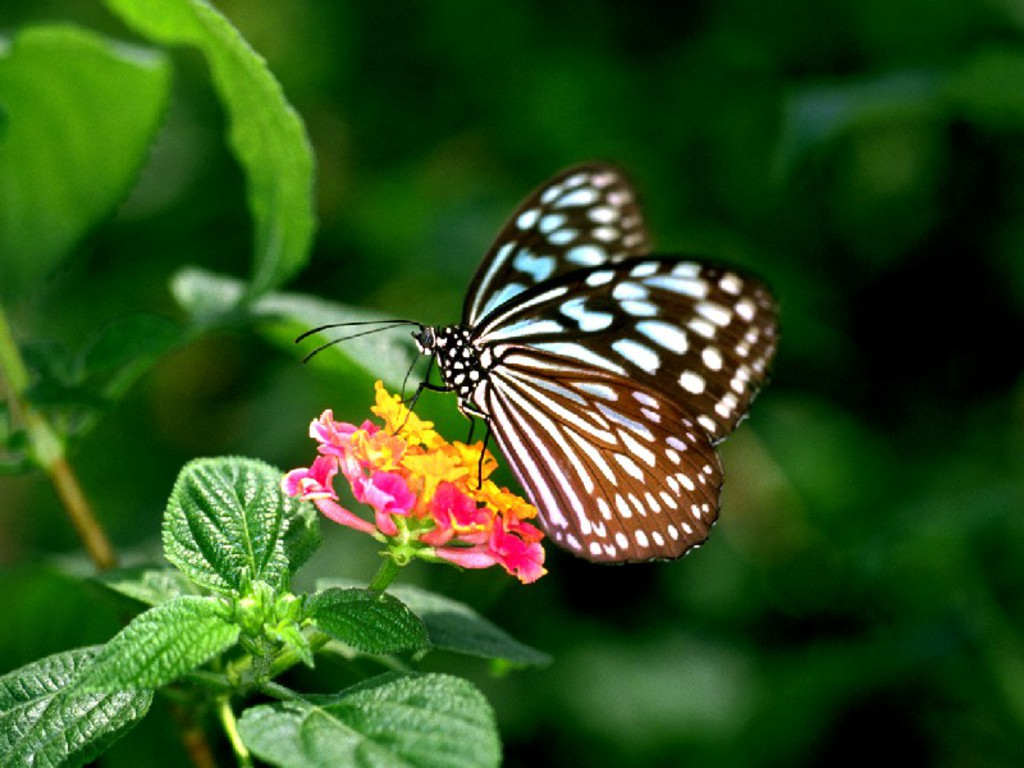 I Love U 3d Wallpaper Download Unique Wallpaper Exotic Butterfly