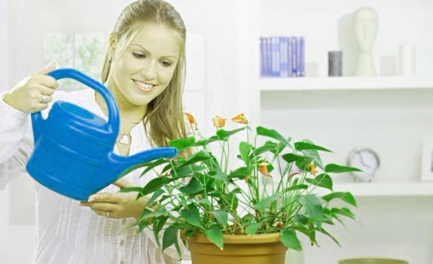 ↑ Las 5 mejores plantas para Oxigenar y Purificar nuestro Hogar