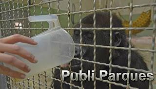 Caldos calientes para gorilas