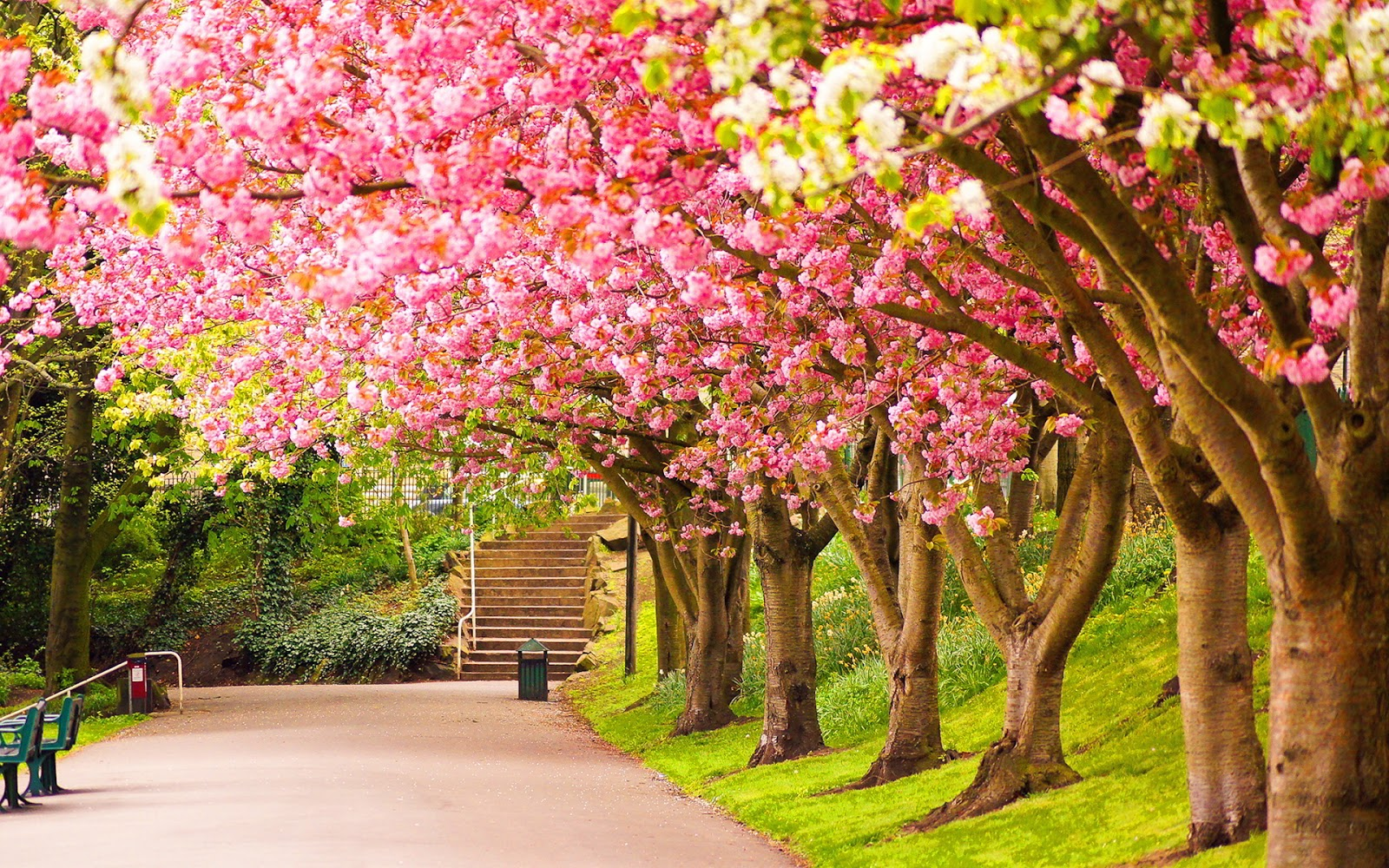 Popular   Wallpaper Home Screen Spring - Spring%2BHD%2BWallpapers%2B%25283%2529  Collection_4818.jpg
