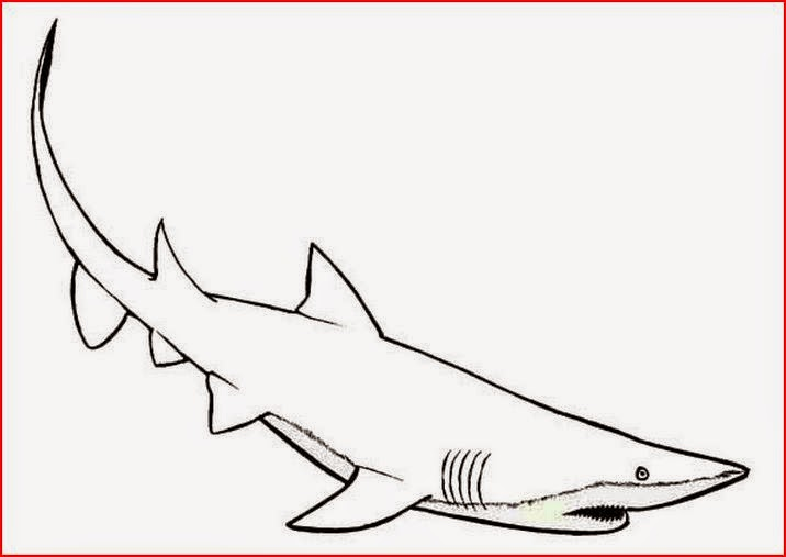 Coloring Pages: Shark Coloring Pages Free and Printable