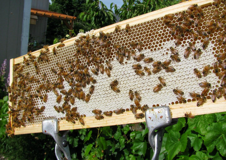 Honeybee Reverie: 2014 Honey for Sale from My Hives