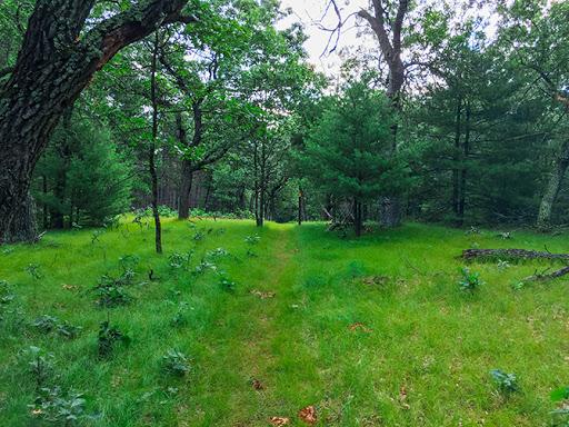 Ice Age Trail Wedde Creek Segment