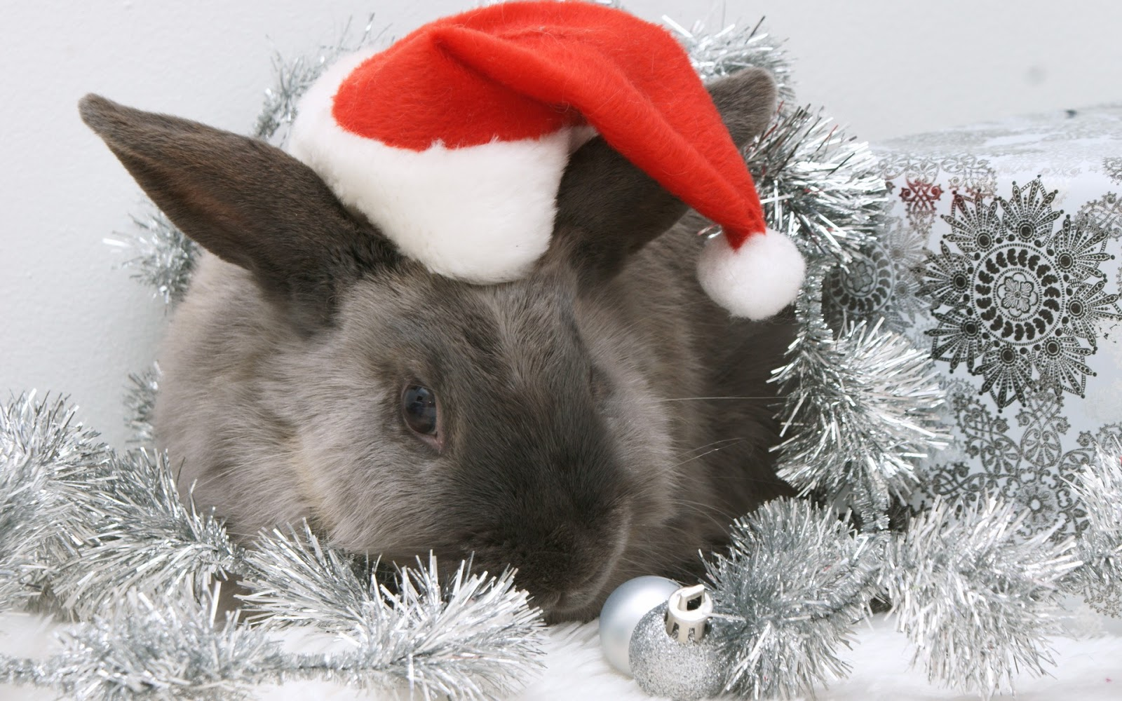 Funny Christmas Animal Wallpaper