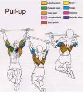8 Tips Cara Membentuk Otot Sayap Dengan Cepat