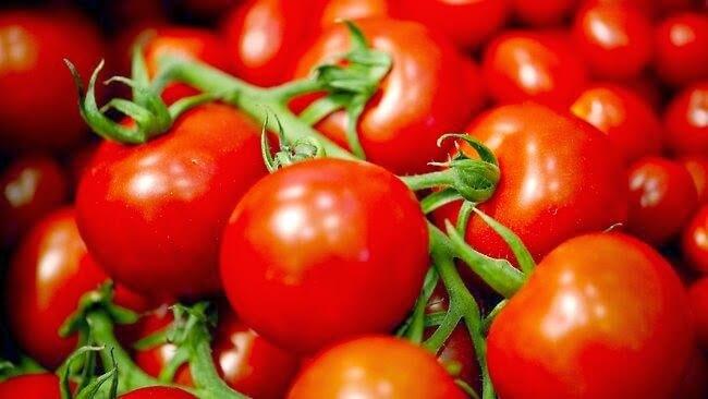 Tomat Segar