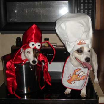 Funny dogs on the kitchen -