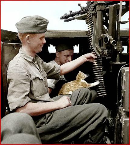 Sd.Kfz.250-1 cats worldwartwo.filminspector.com