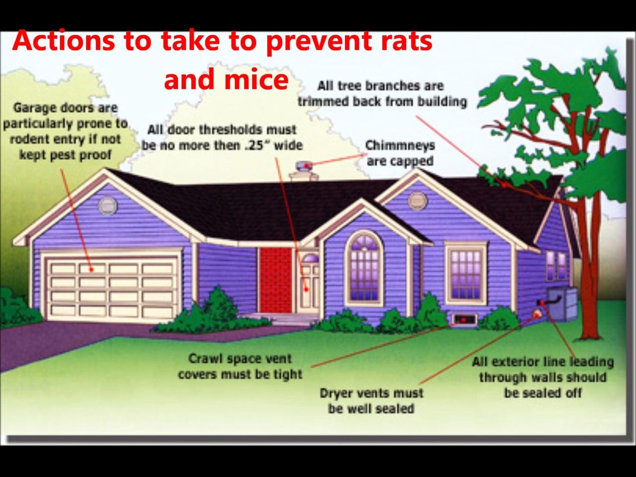 Getting rid of rats ~ UK Property Headlines
