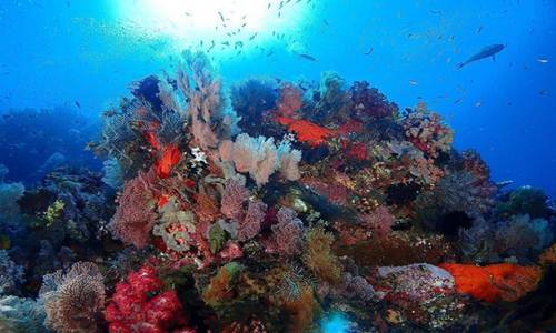 keindahan wisata raja ampat papua