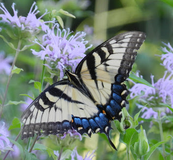 PLANT NATIVE AND WELCOME POLLINATORS