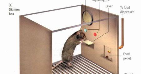 skinner mouse