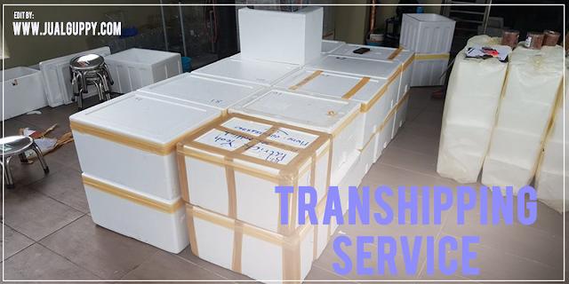 Transhipping Service Indonesia, Kirim Ikan Keluar Negri, Export Ikan, Jual Ikan Hias