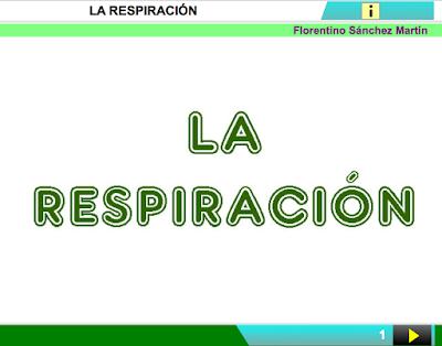 Resultado de imagen de cplosangeles.juntaextremadura.net/web/segundo_curso/naturales_2/respiracion02/respiracion02.html