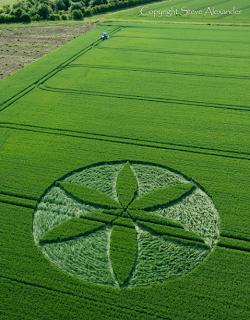 Élet Virága gabonakör jelent meg Angliában (2013.jún.25.)