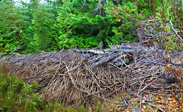 The Natural Brush Piles Looked A Bit Like This