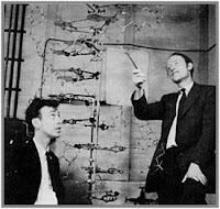 Watson and Crick proposed the double helical structure of DNA
