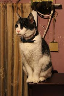 Krásné šíření kočička obrázky