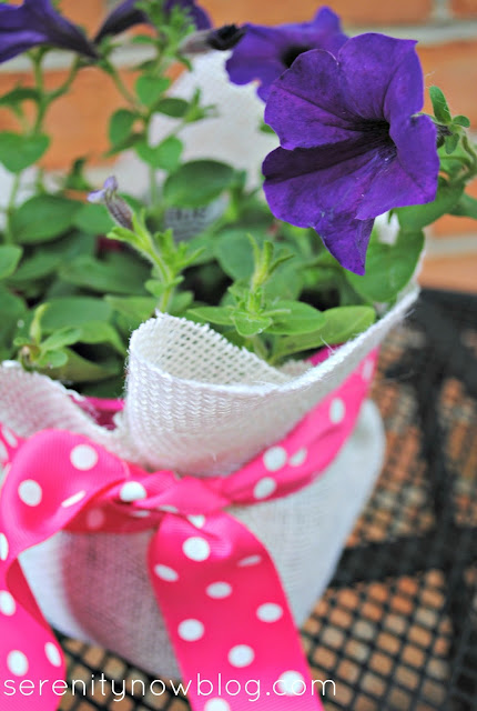 Dress Up a Plant in a Plastic Pot (Teacher Gift), from Serenity Now