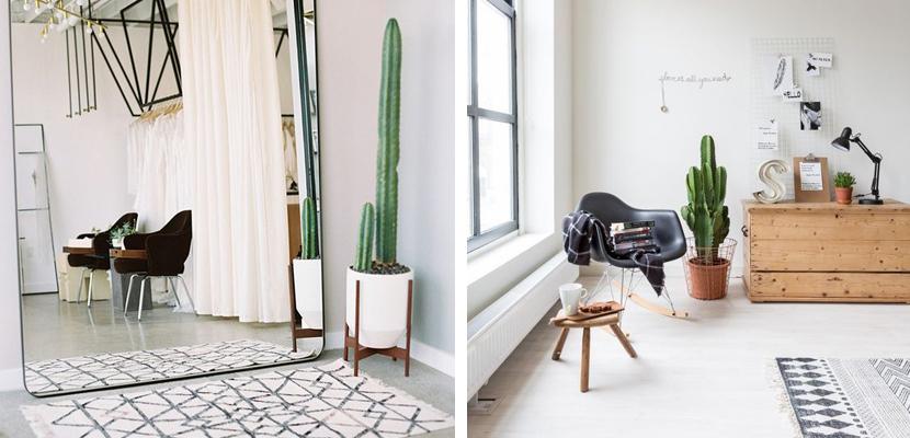 Marzua decorar el hogar con cactus for Decorar hogar 2016