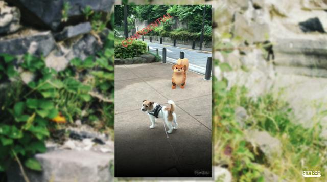 Pokémon GO Growlithe dog AR