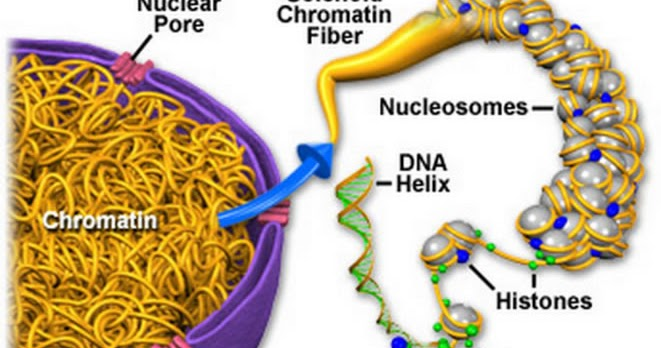 Plant Life: Chromatin