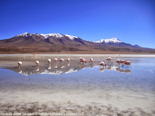 flamingos in salar de uyuni