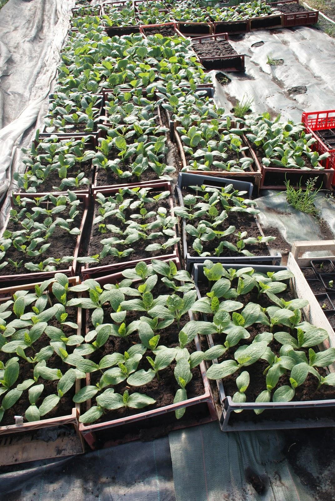 les derni res infos de haute tarentaise par pierre villeneuve envie de plants envie de jardin. Black Bedroom Furniture Sets. Home Design Ideas