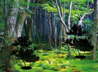 Juegos de Escape - Typical Forest Escape