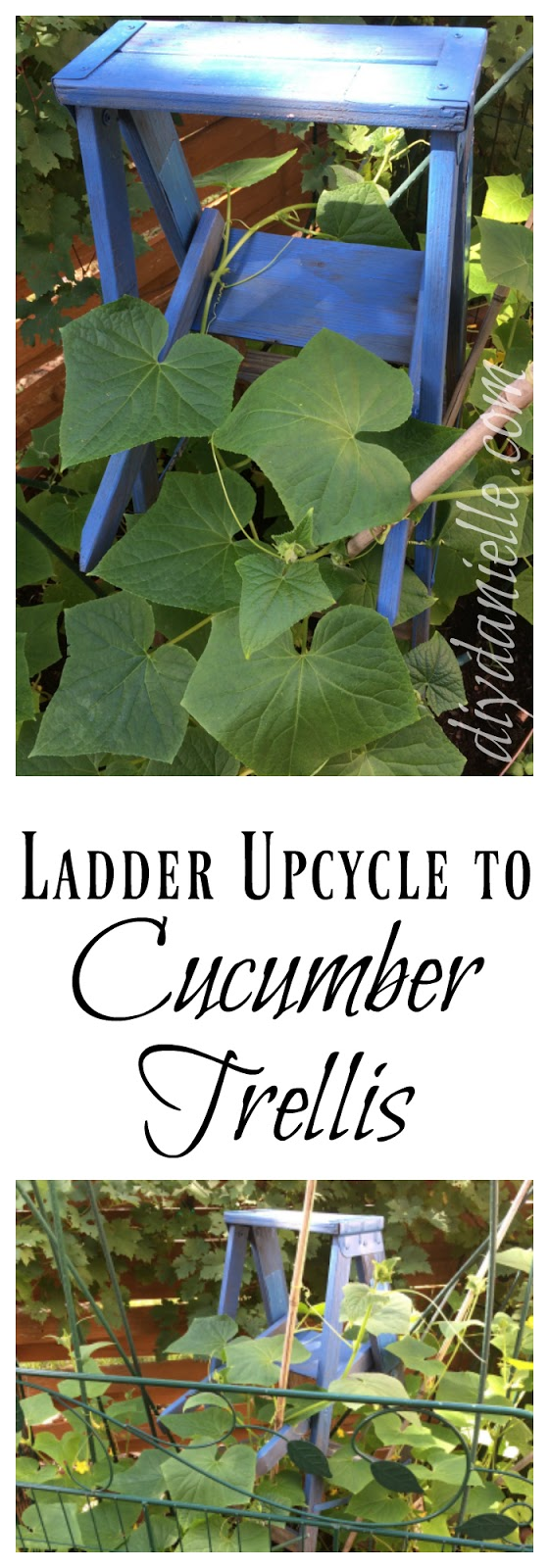 How to repurpose an old wooden ladder into a garden trellis.