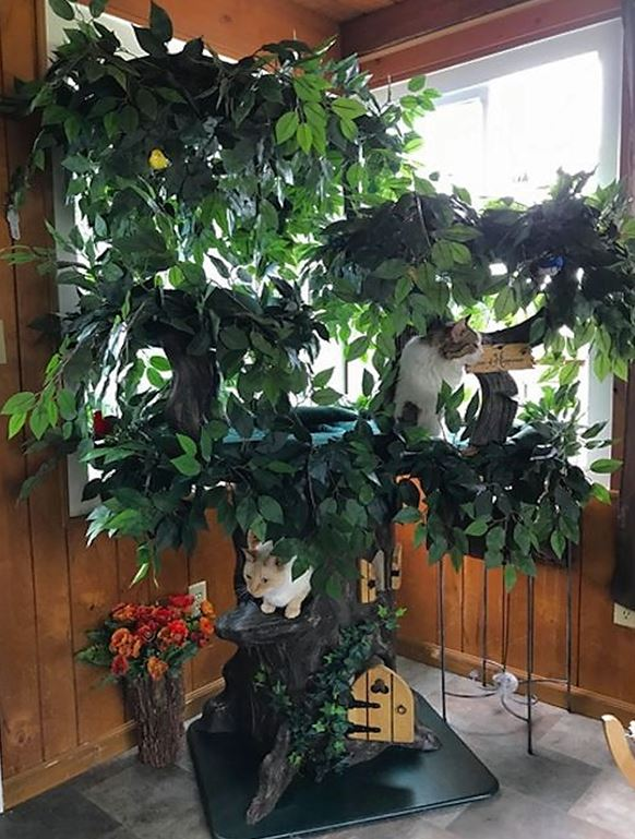 Ultimate Cat Trees