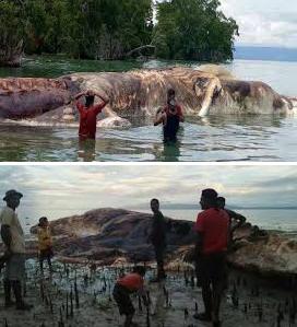 Hewan Raksasa terdampar di pantai Seram