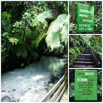 The Healing Te Waireka Spring at Paradise Valley Springs Wildlife Park Rotorua New Zealand
