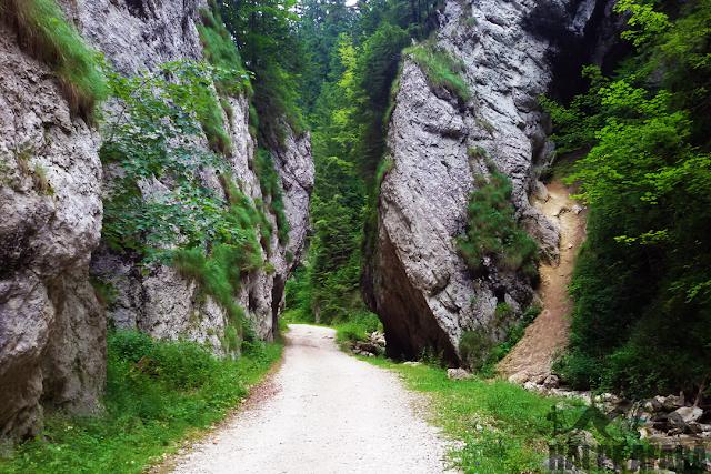 imagine de pe traseul din Prapastiile Zarnestilor