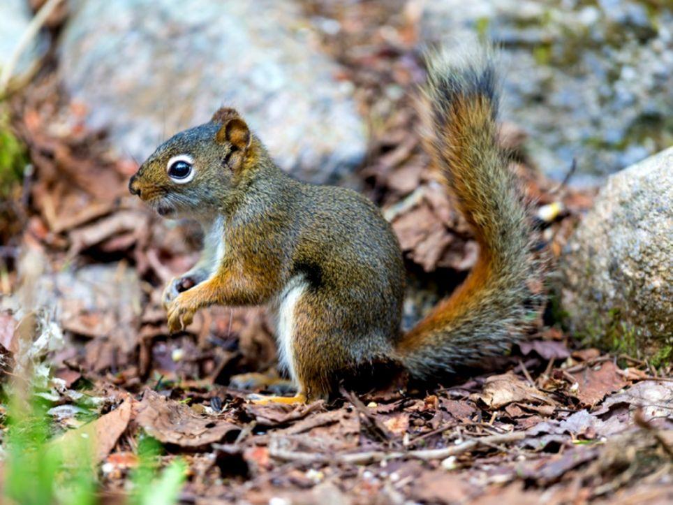 Squirrel Removal Philadelphia PA Marks Wildlife Control