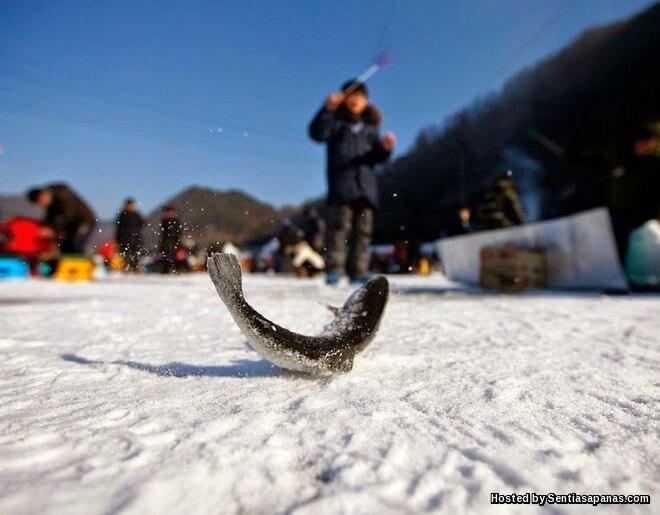 Hwacheon Sancheoneo Ice Fiesta
