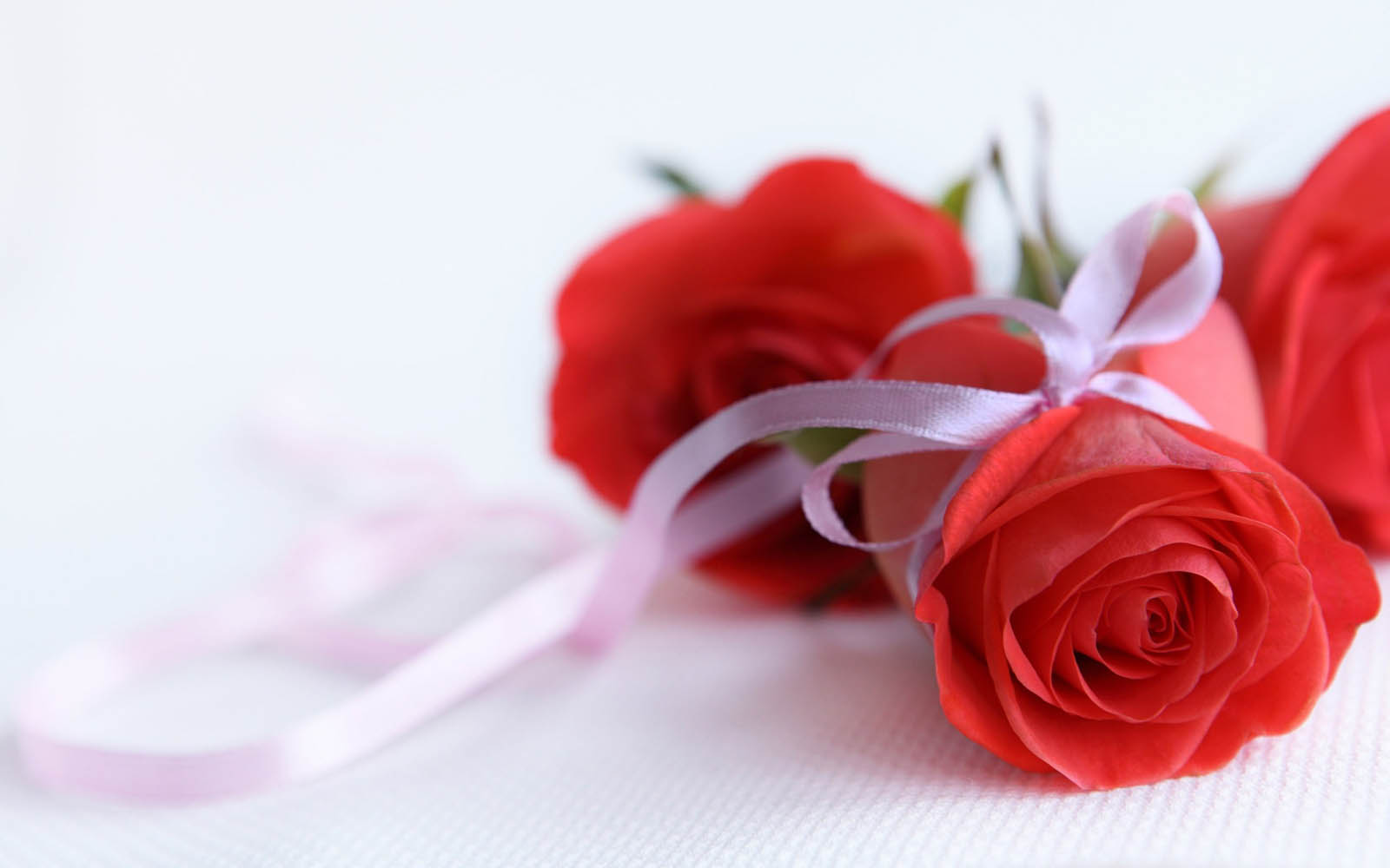 wallpapers: Red Rose Wallpapers