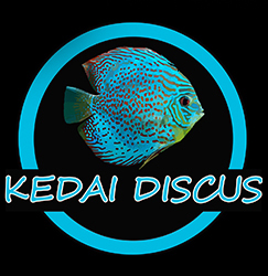 Kedai Ikan Discus