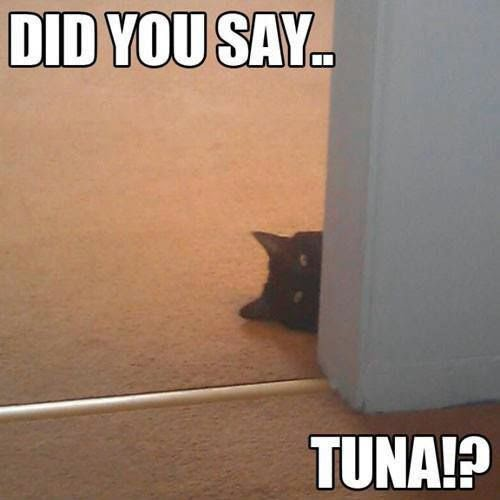Funny Did You Say Tuna Cat Joke Picture