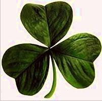 Trébol de tres hojas