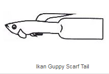 Scarf Tail