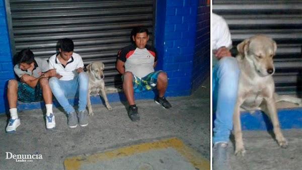Policias detienen a tres hombres y un perro  cuando intentaban robar una tienda