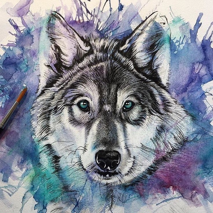 01-Alpha-Wolf-Liam-James-Cross-Wild-Animals-Drawings-and-Paintings-www-designstack-co