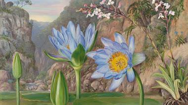 Marianne North. El arte de observar y pintar la naturaleza