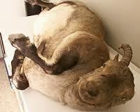 El cadaver de Celia, congelado