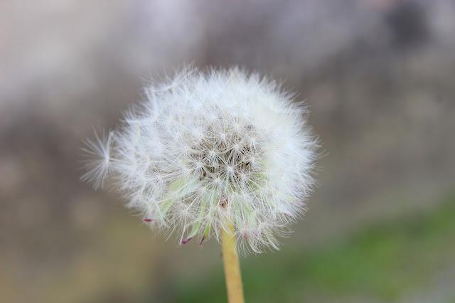 polenler